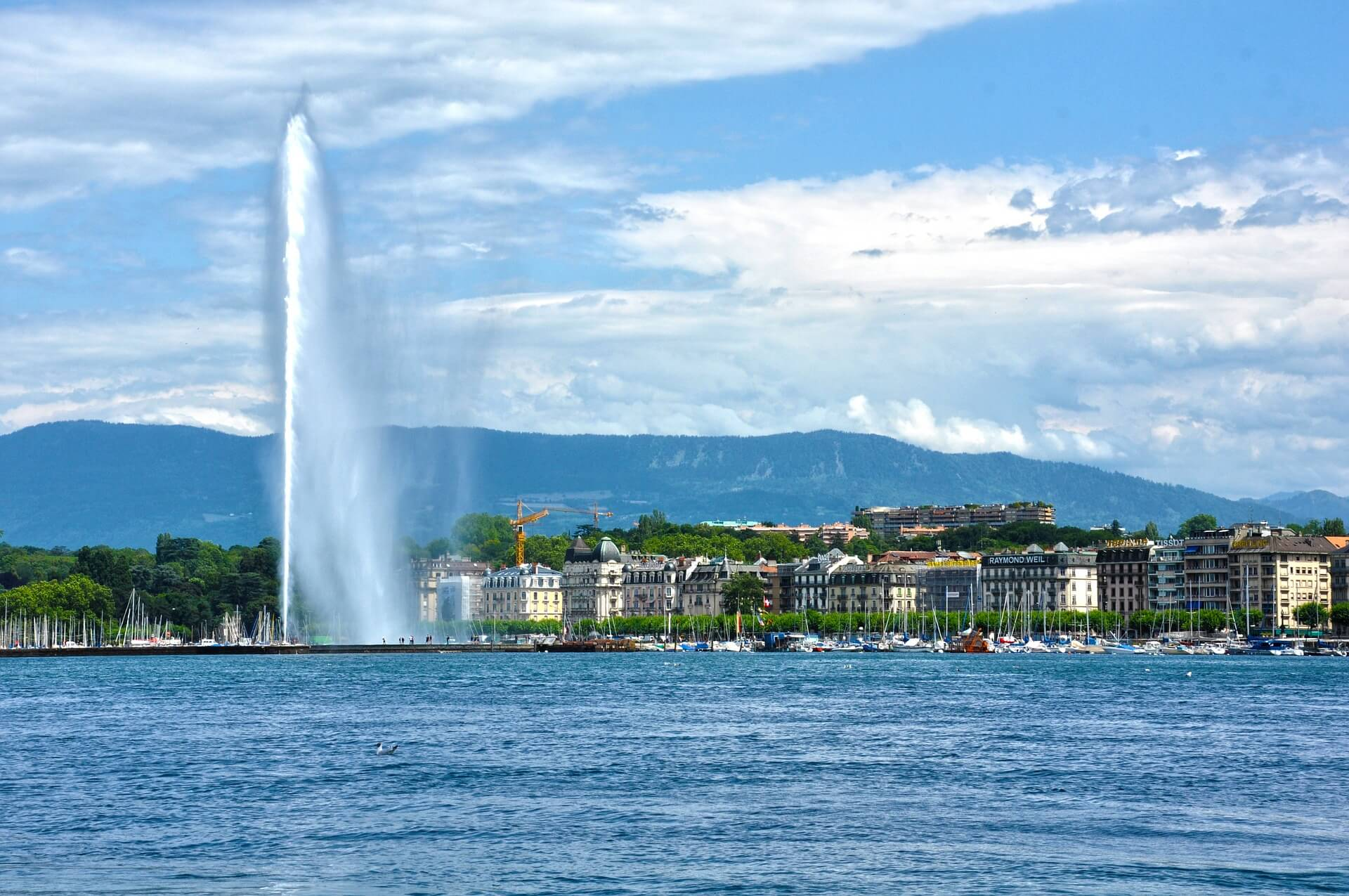 2019 FIVS Geneva Meetings